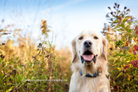 halton pet photographer