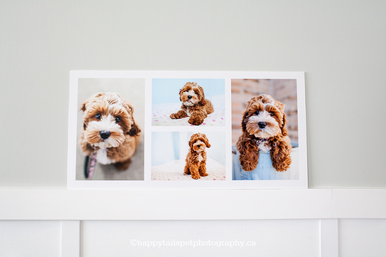 Ontario pet photography storyboard, product photo.