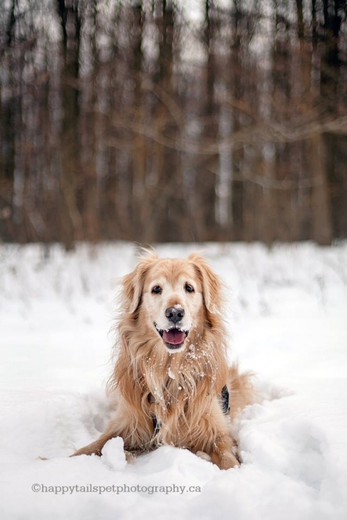 Friday fetch how to keep your pet happy in winter modern ontario pet photography happy - Keeping outdoor dog happy winter ...
