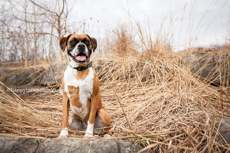 Remembering your dog with pet photography in the Burlington, Oakville and the GTA.