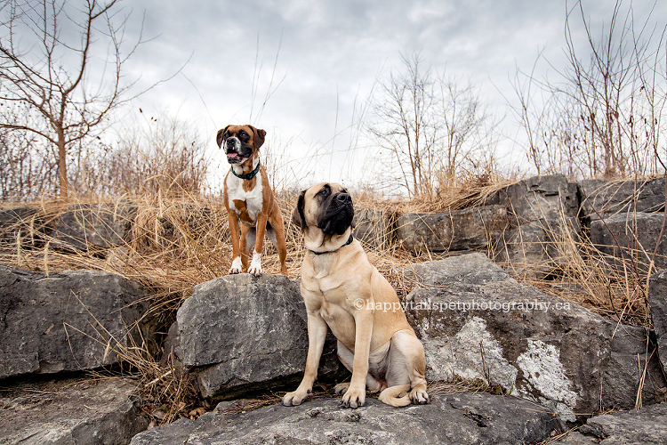 Professional dog photography in Ontario.