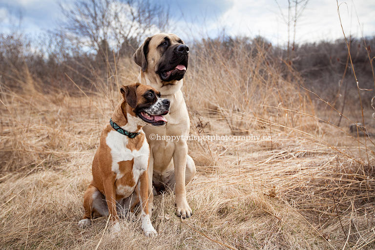 Modern, natural pet photography by Burlington dog photographer.