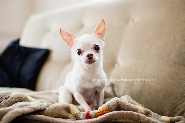 Oakville old dog photography for sick or senior dogs to remember your pet.