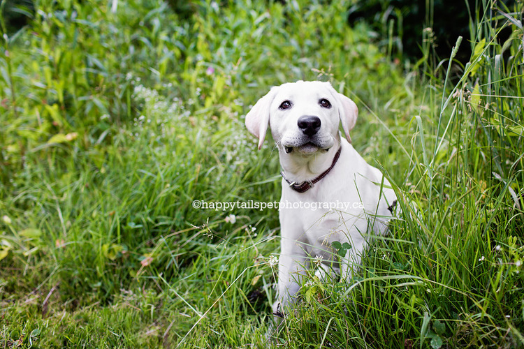 Puppy with cute expression poses for pet portraits in Lowville Park.