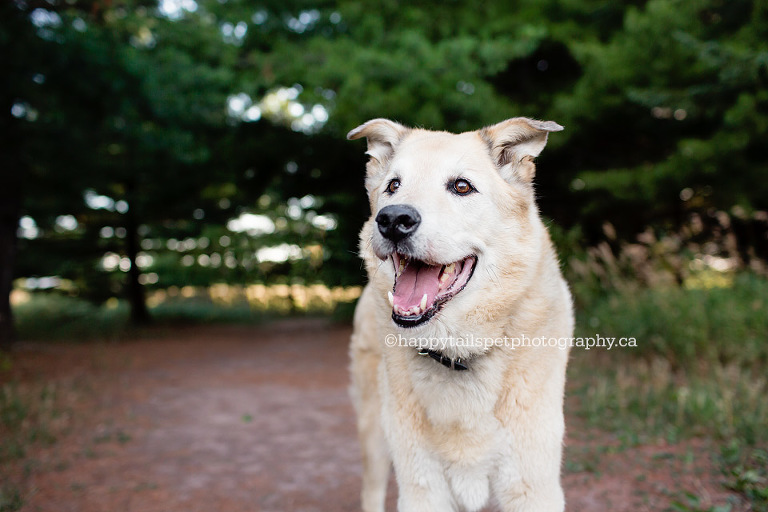 Dog photography at Bronte Creek Provinvial Park in Burlington, Ontario by Happy Tails Pet Photography.