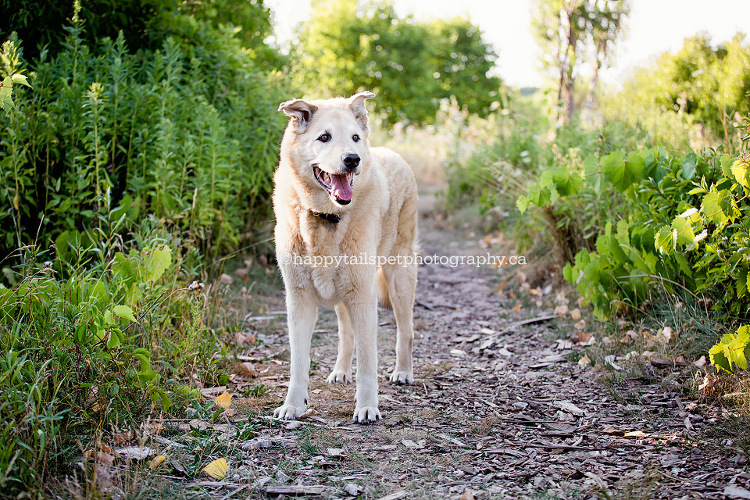 Photography for dying or old dogs in GTA and Ontario.
