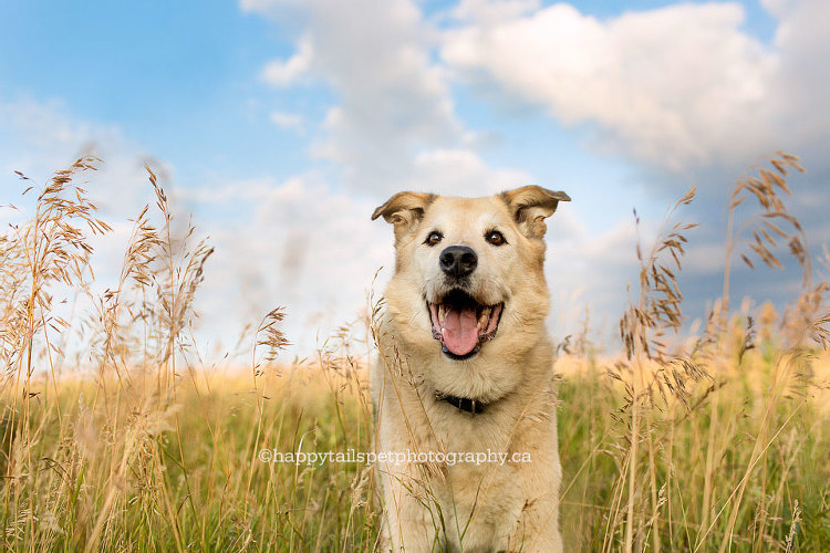 Dog photo, Burlington photographer.