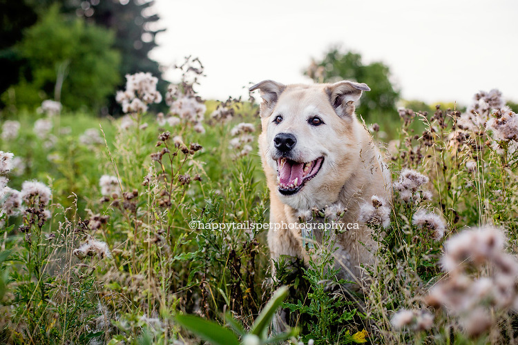 GTA dog photos, Toronto, Oakville, Burlington, Hamilton