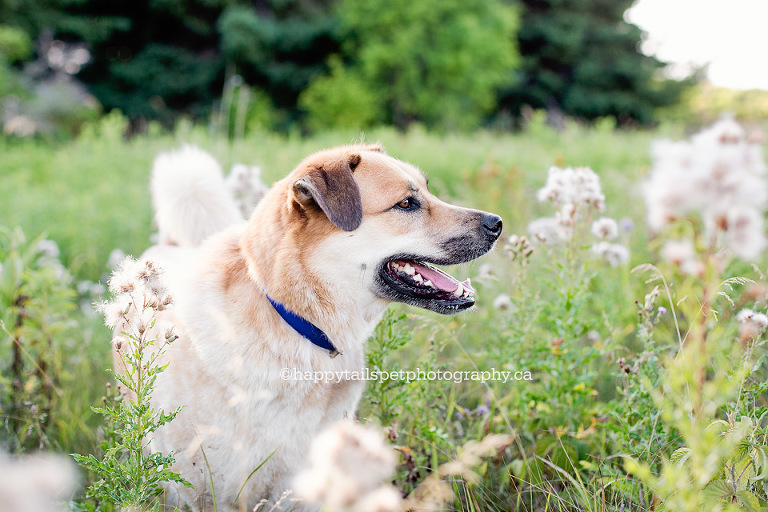 Candid outdoor pet photography for dogs and cats in southern Ontario and Halton Region.