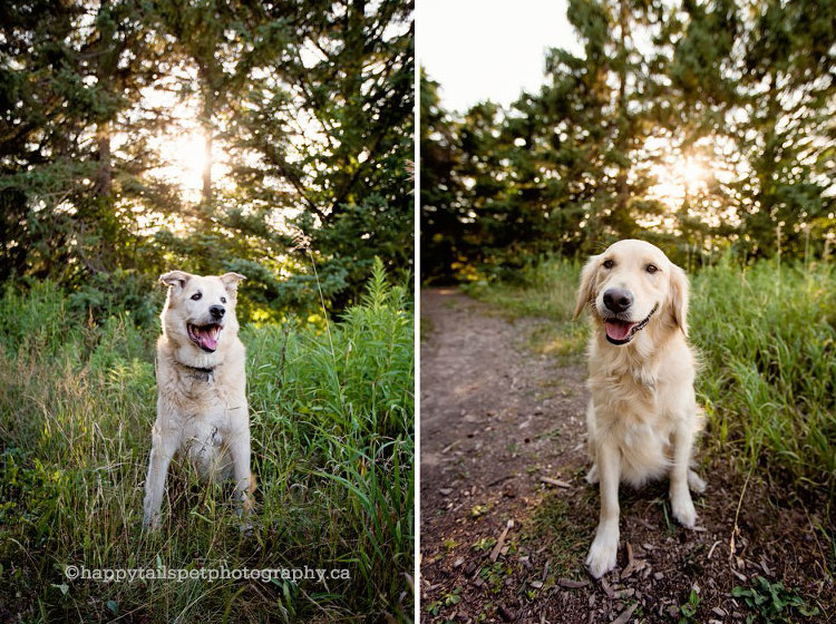 Happy, bright, natural light Ontario dog photographer.
