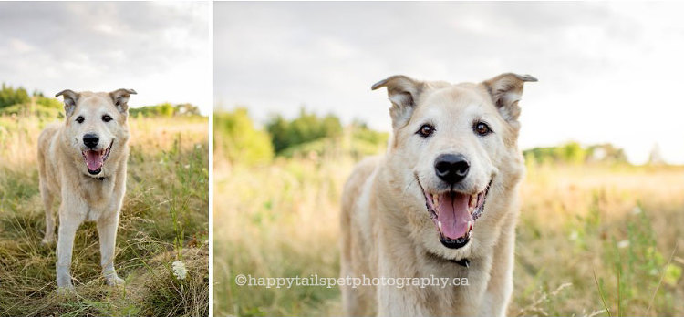 Modern, lifestyle, on-location pet photography, capturing the spirit of your pet.
