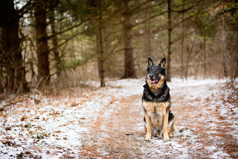 Natural dog photography in Niagara and the Golden Horsehoe.