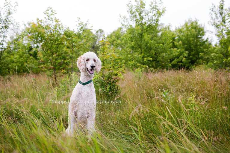Summer dog portrait by Ontario pet photographer.